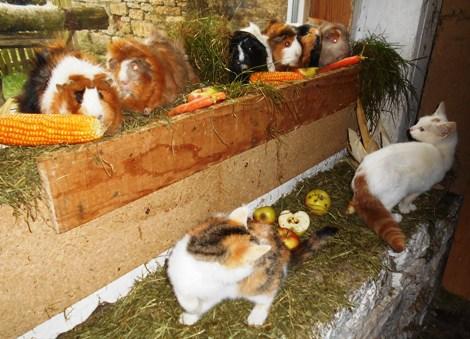 Tierseite streichelzoo und kinderparadies for Goldfischteich pflege